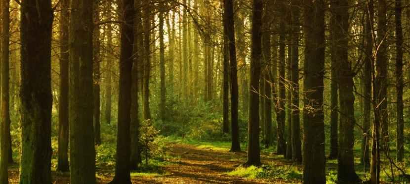 Che cosa significa camminare nei boschi? Rocco Drosi, socio di PenSiamo, ci immerge nella magia di quei momenti, come se fosseora…